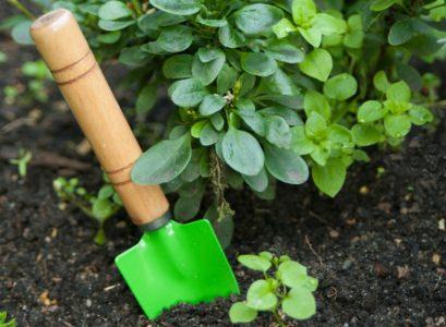 cadeaux de jardinage