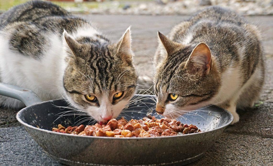 chat mange