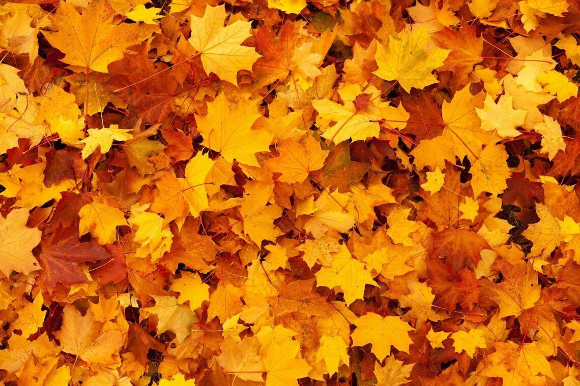 des feuilles en automne