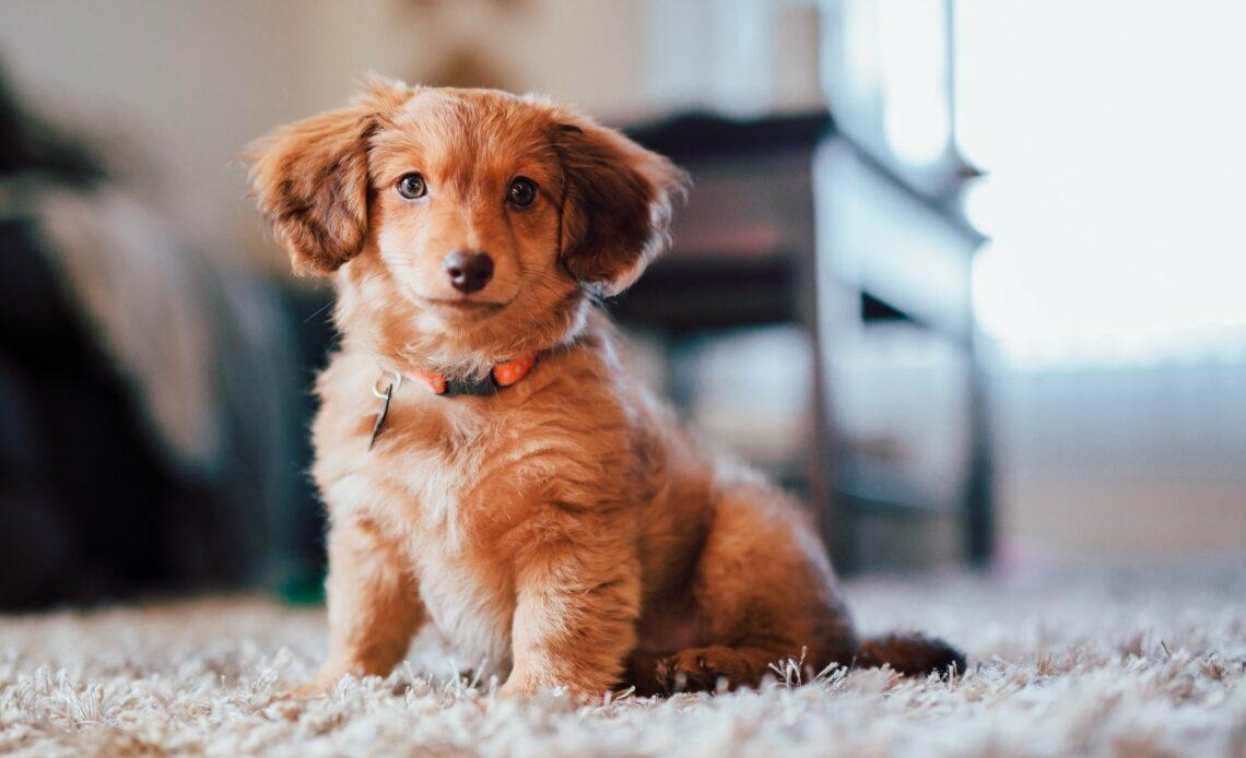 idée assurance pour chien