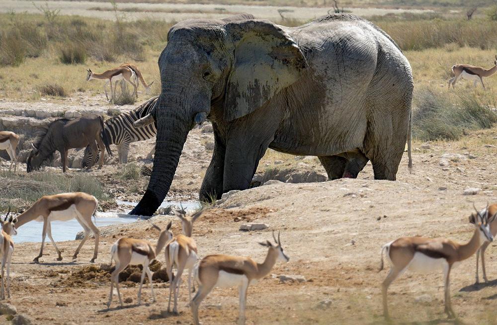parc animalier lyon