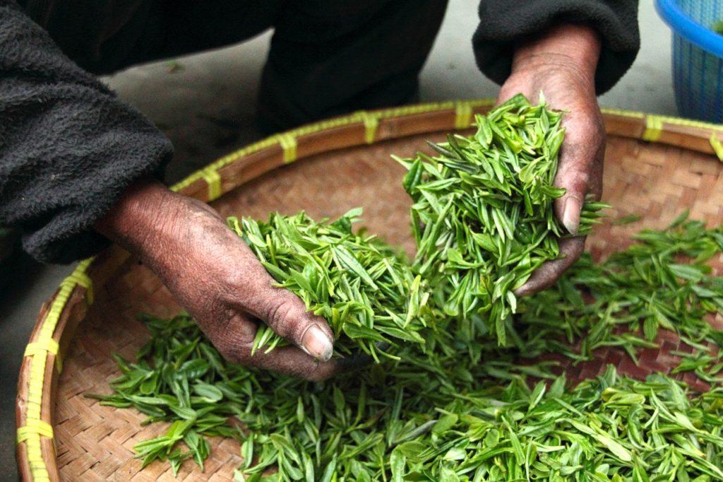 preuve que le thé est bon pour sa santé